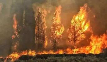 عشرات الحرائق تلتهم مساحات واسعة من الأراضي في لبنان وسوريا