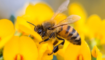 الأمم المتحدة تدعو إلى حماية النحل والملقحات الأخرى