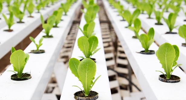 """""""الفاو"""": الابتكار الزراعي يساعد على منع تحول الجفاف إلى مجاعة"""