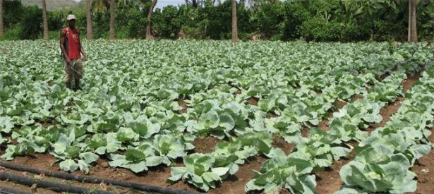 L'UE annonce un soutien financier en faveur des petites exploitations agricoles en Afrique