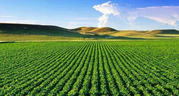 Campagne agricole 2020/2021: un programme d'assolement sur 5,8 millions Ha des cultures d'automne