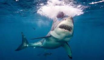 Un homme tué par un requin dans le nord-ouest de l'Australie