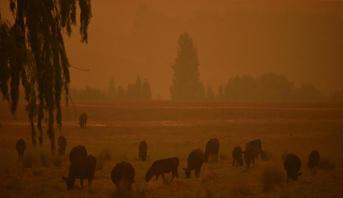 أستراليا.. إعلان حالة الطوارئ وسط تهديد حرائق الغابات للعاصمة كانبيرا