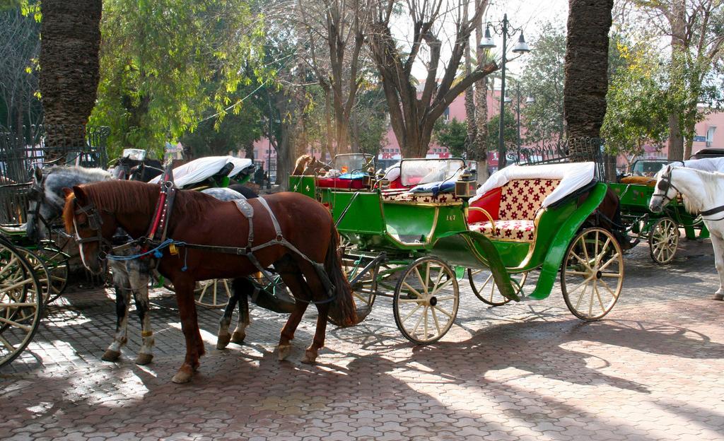 Une balade en calèches à Marrakech pour sensibiliser quant à l'importance de la relance du secteur du tourisme