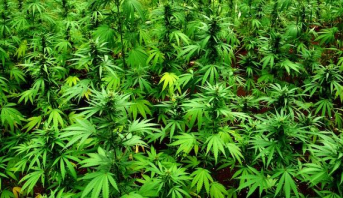 Saisie de plus d'une tonne de cannabis à Liège, un record