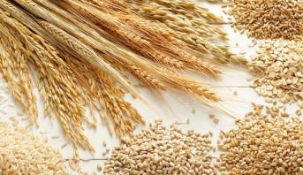 ارتفاع واردات الحبوب بالمغرب بنسبة 51 في المائة في متم غشت الماضي