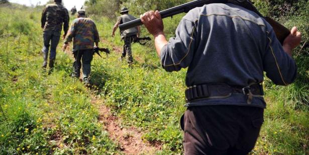Braconnage de tourterelles: quatre personnes prises en flagrant délit à Taroudant