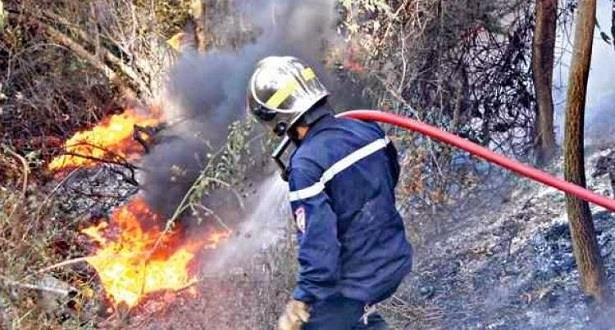 Feu de forêt à Chefchaouen: quelque 470 hectares ravagés, la lutte se poursuit
