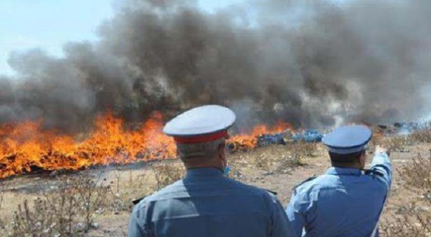 Destruction d'environ 12 tonnes de drogue à Al Hoceima