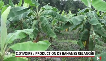 Côte d'Ivoire: la production de bananes relancée