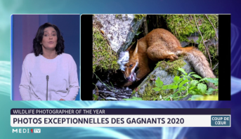 Wildlife photographer of the year: photos exceptionnelles des gagnants 2020