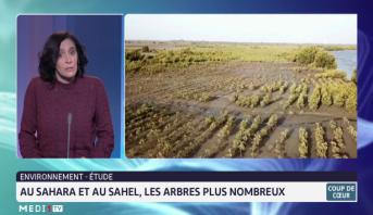 Environnement-étude: Au Sahara et au Sahel, les arbres plus nombreux