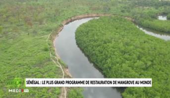 Croissance Verte > Sénégal: des projets pour la sauvegarde la mangrove