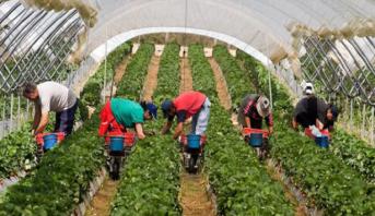 Huelva: lancement du plan de rapatriement des 7.100 travailleuses saisonnières marocaines