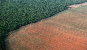 """WWF: 43 millions d'hectares anéantis dans 24 """"hauts lieux de la déforestation"""""""