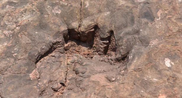 اكتشاف آثار أقدام ديناصورات تعود لـ 100 مليون عام