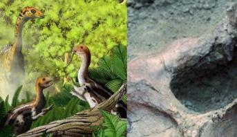 حفريات تكشف عن ديناصور وديع كان يفقد أسنانه مع وصوله لمرحلة البلوغ