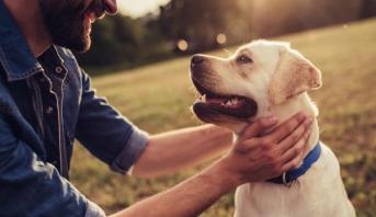 علماء : الكلب قادر على مشاعر الحب