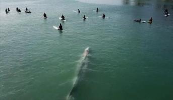 فيديو .. لحظة مرور حوت عملاق قرب راكبي أمواج في أمريكا