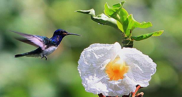 """اليوم العالمي للبيئة.. تسليط الضوء على تدهور """"التنوع البيولوجي"""" الذي يهدد الحياة على كوكب الأرض"""