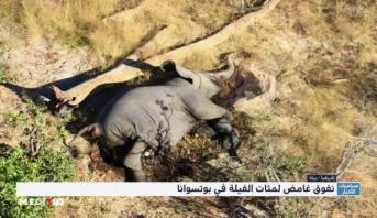 نفوق غامض لمئات الفيلة في بوتسوانا