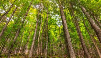 دراسة بولونية تخلص الى أن الغابات وحدها لن تضمن حياد المناخ