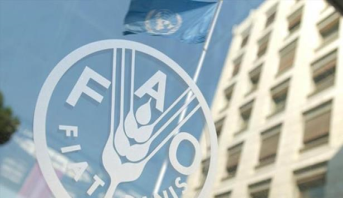 Forte hausse des prix mondiaux des denrées alimentaires en novembre (FAO)