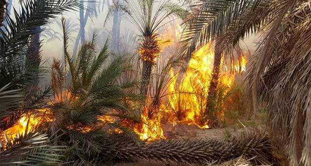 Errachidia : Plus de 2.540 palmiers ravagés par le feu dans l'oasis de Ziz à Aoufous