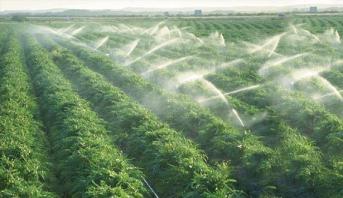 أزيد من 39 مليار درهم قيمة صادرات المنتجات الغذائية الفلاحية خلال الموسم الفلاحي 2019-2020