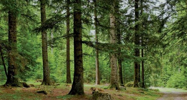 La stratégie «Forêts du Maroc» exposée à la FAO