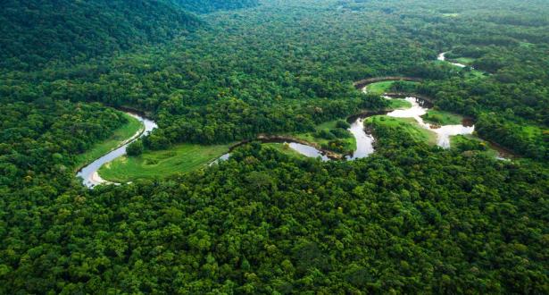 الغابات المدارية قد تبعث الكربون في الجو بسبب الاحترار المناخي