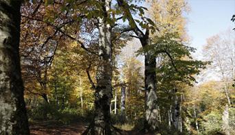الغابات توفر أكثر من 86 مليون وظيفة خضراء
