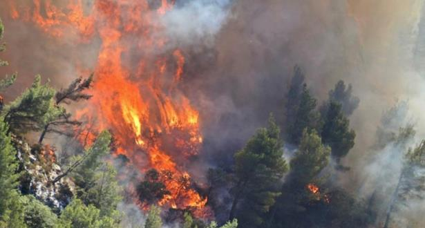حرائق تجتاح 480 هكتارا من الغابات الفرنسية
