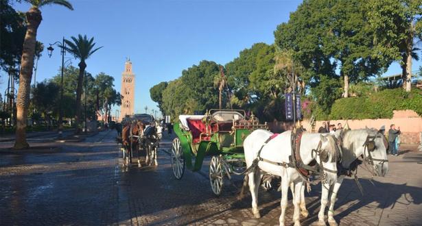 مراكش .. زي موحد لسائقي العربات السياحية المجرورة بالخيول