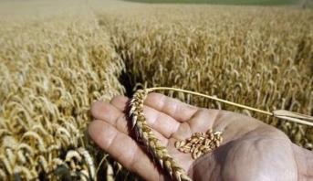 Zones déclarées sinistrées: l'indemnisation des agriculteurs avancée de 2 mois
