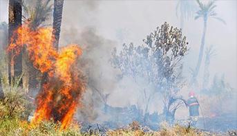 السيطرة على حريق غابوي بجماعة بوابوض أمدلان بإقليم شيشاوة