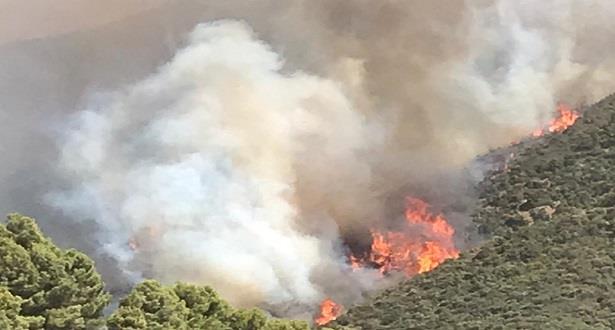 Vague de chaleur exceptionnelle : 1.200 ha de forêts incendiés en 3 jours