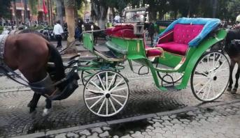 مراكش.. جولة على متن العربات السياحية للتحسيس بأهمية عودة الحياة إلى طبيعتها