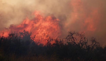 إجلاء 60 ألف شخص بسبب حريق غابات قرب لوس أنجليس