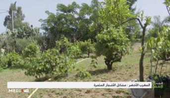 """""""المغرب الأخضر"""" .. مشاتل الأشجار المثمرة"""