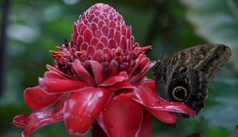 الأمم المتحدة: أزيد من 70 بلدا منها المغرب تتبنى التزاما عالميا للحفاظ على الطبيعة والتنوع البيولوجي