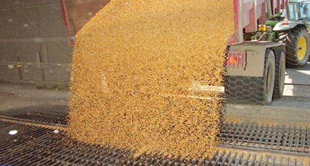 توقعات بموسم حبوب جيد جدا بإنتاج بقيمة 98 مليون قنطار