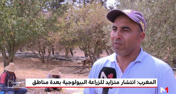 المغرب.. انتشار متزايد للزراعة البيولوجية بعدة مناطق