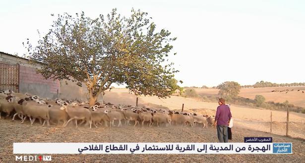 """""""المغرب الأخضر"""" .. الهجرة من المدينة إلى القرية للاستثمار في القطاع الفلاحي"""