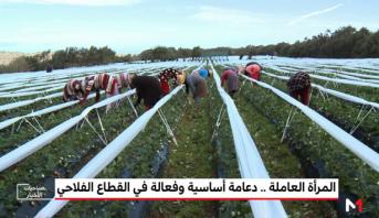 """""""المغرب الأخضر"""" .. المرأة العاملة، دعامة أساسية وفعالة في القطاع الفلاحي"""