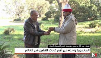 """""""المغرب الأخضر"""" .. المعمورة واحدة من أهم غابات الفلين"""