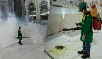 بالصور .. عمليات مكثفة لمحاربة حشرات اجتاحت محيط الحرم المكي