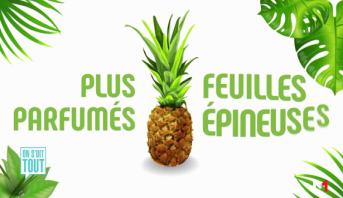 On s'dit tout > Ananas: les bienfaits du roi des fruits!