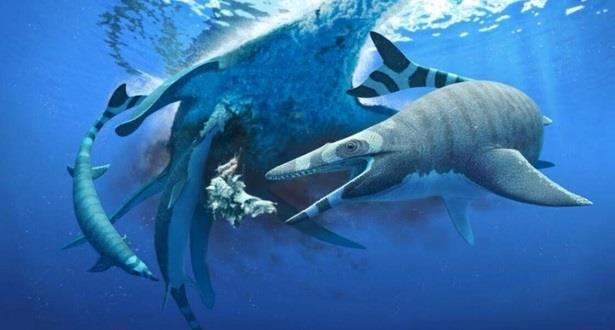 """Découverte au Maroc d'un lézard marin aux """"dents de requins"""" datant de millions d'années"""