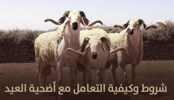 النصائح المتعلقة بشروط وكيفية التعامل مع أضحية العيد
